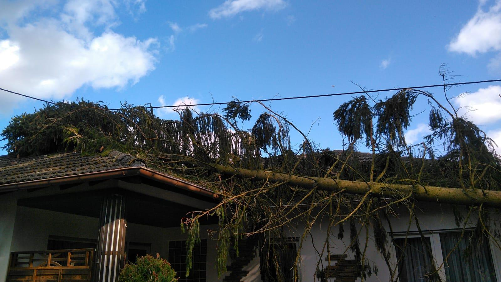 Baum auf Wohnhaus