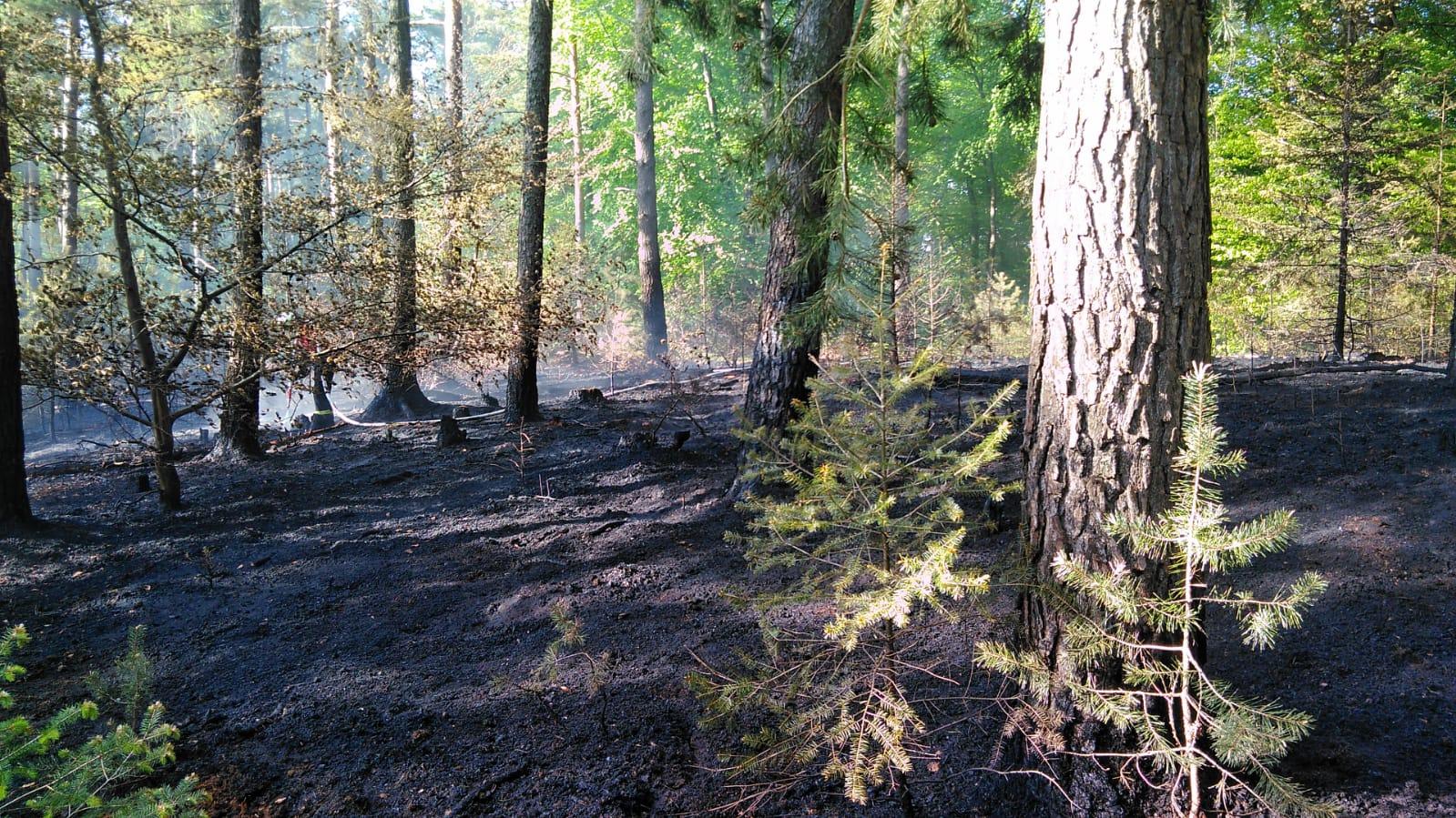 Flächenbrand groß