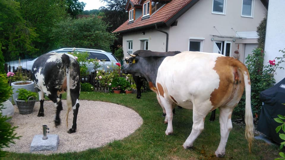 Absicherung – Pferde und Kühe auf Fahrbahn